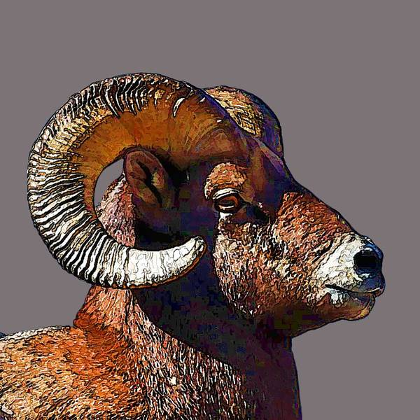 Digital Art -  Ram Portrait - Rocky Mountain Bighorn Sheep By Olena Art by OLena Art Brand