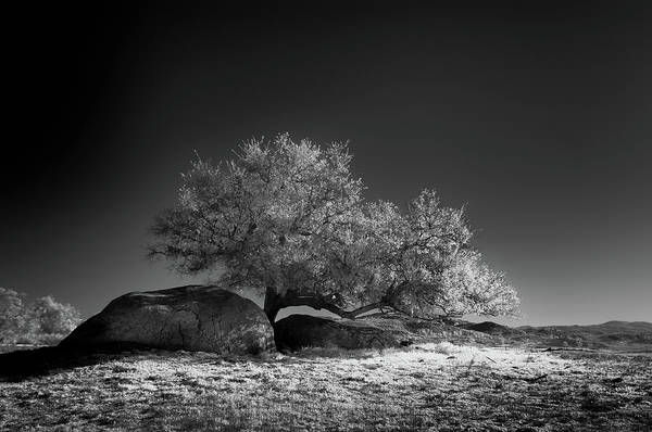 Ir Photograph - Ramona Oak In Ir by Joseph Smith