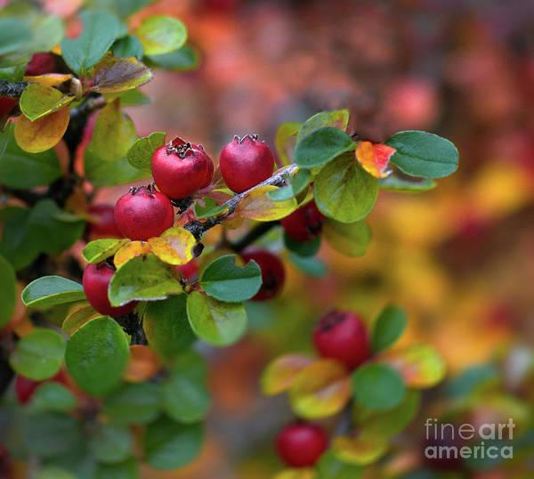Photograph - Ramona's Berries by Susan Warren