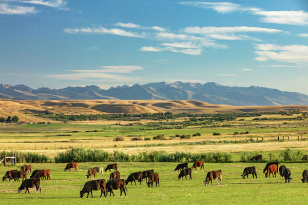 Photograph - Ranch And Range by Todd Klassy