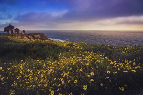 Rancho Palos Verdes Super Bloom Art Print