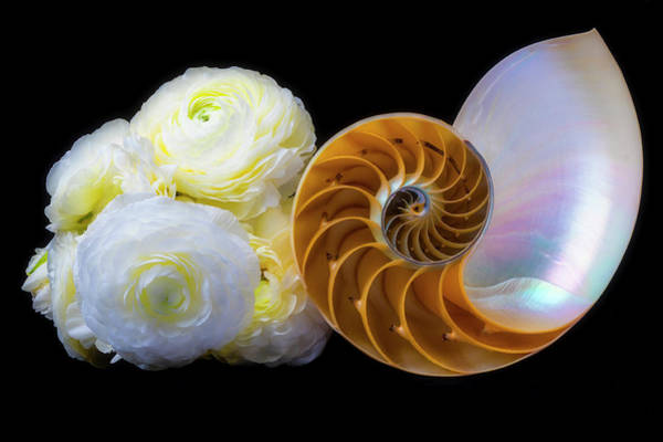 Wall Art - Photograph - Ranunculus And Nautilus Shell by Garry Gay