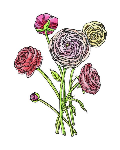 Painting - Ranunculus Flower Botanical Watercolor by Irina Sztukowski