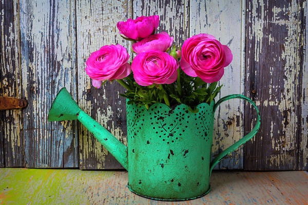 Ranunculus Photograph - Ranunculus In Green Watering Can by Garry Gay