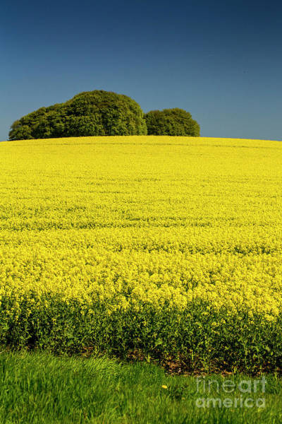 Wall Art - Photograph - Rapeseed Field by Sheila Smart Fine Art Photography