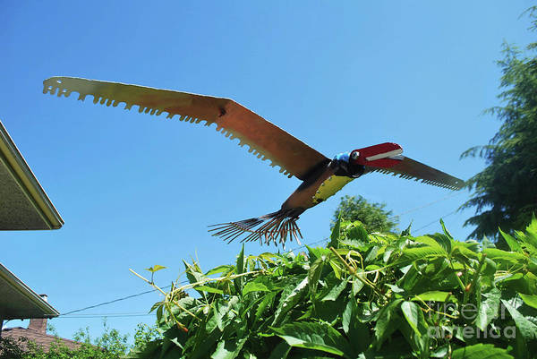 Photograph - Raptor Fly Over by Bill Thomson