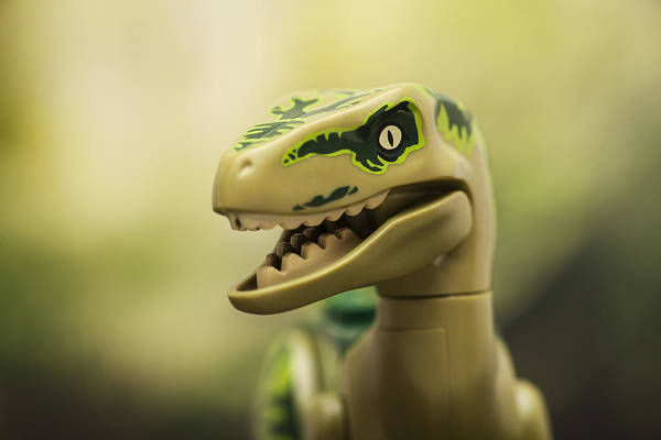 Tooth Photograph - Raptor On The Prowl by Samuel Whitton