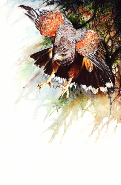 Painting - Raptor by Peter Williams