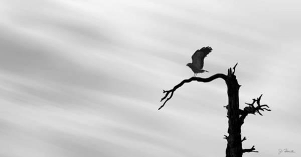 Silhoutte Photograph - Raptor Silhouette by Joe Bonita