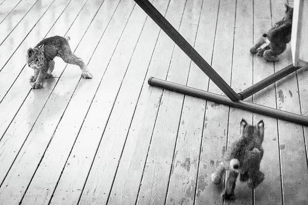 Photograph - Triple Threat by Tim Newton