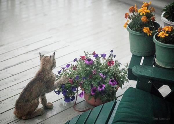 Photograph - Swat The Petunias by Tim Newton