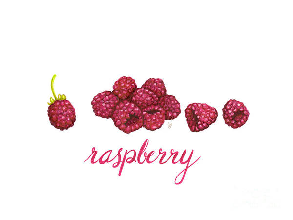 Painting - Raspberry by Cindy Garber Iverson