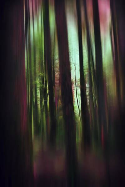 Photograph - Raspberry Woodlands by Evie Carrier