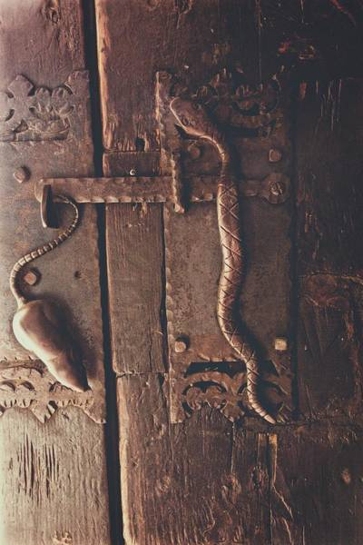 Photograph - Rat And Snake by Alice Gipson