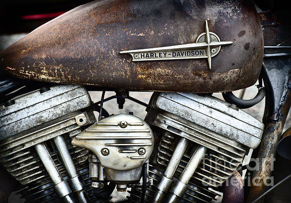 Wall Art - Photograph - Rat Harley by Tim Gainey