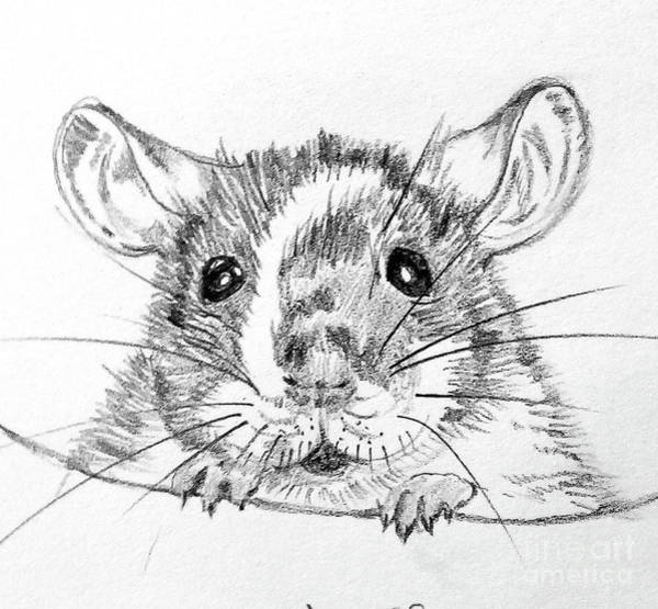 Hamster Drawing - Rat Sketch by Susan Paquette