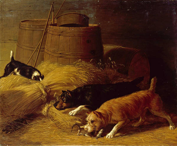 Barley Painting - Rats Amongst The Barley Sheaves by Thomas Hewes Hinckley