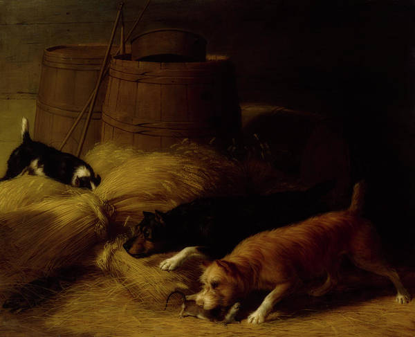 Barley Painting - Rats Amongst The Barley Sheaves by Thomas Hinkley