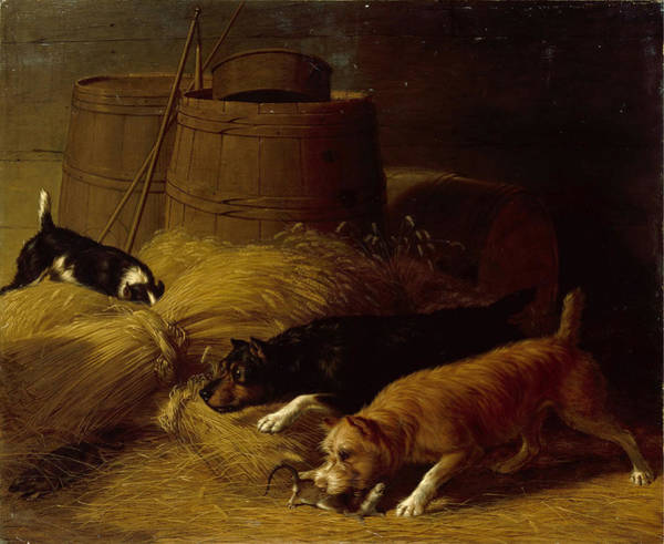 Barley Painting - Rats In The Barley Sheaves by Thomas Hughes