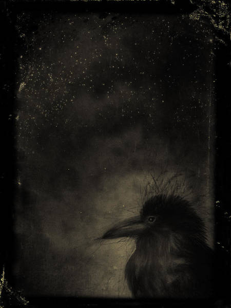 Mixed Media - Raven by Christina VanGinkel