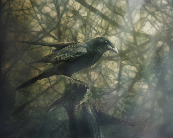 Wall Art - Digital Art - Raven Forest by Susan Capuano