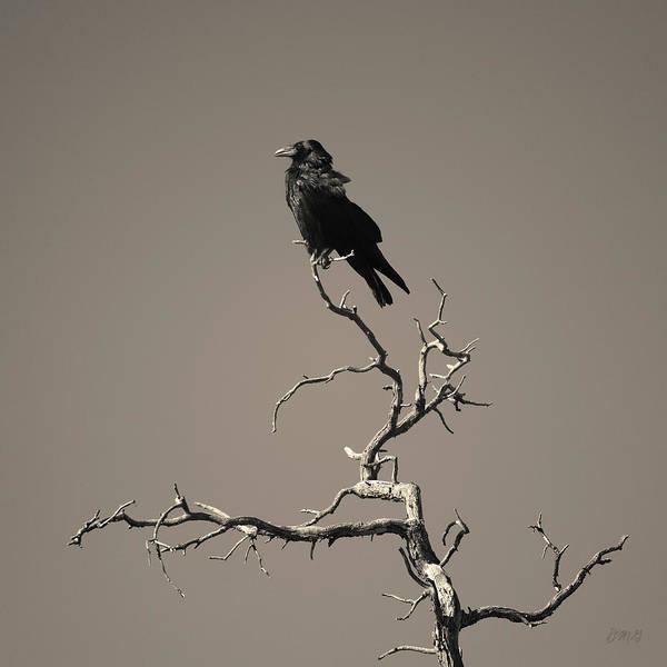 Photograph - Raven IIi Toned by David Gordon