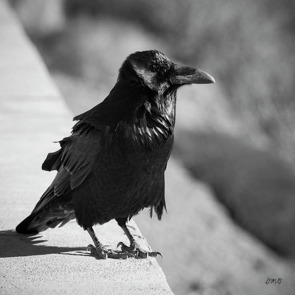Photograph - Raven Iv Bw by David Gordon