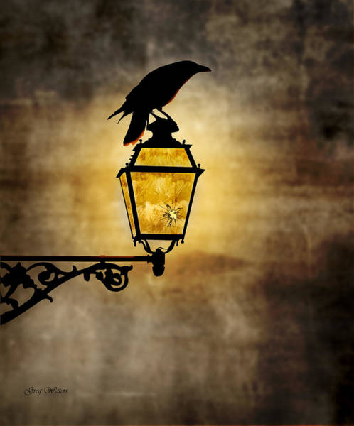 Wall Art - Photograph - Raven Lamp by Greg Waters