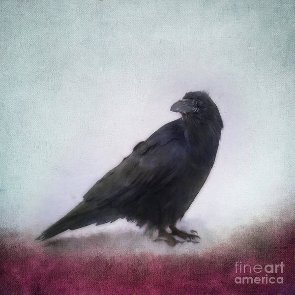 Wall Art - Photograph - Raven by Priska Wettstein