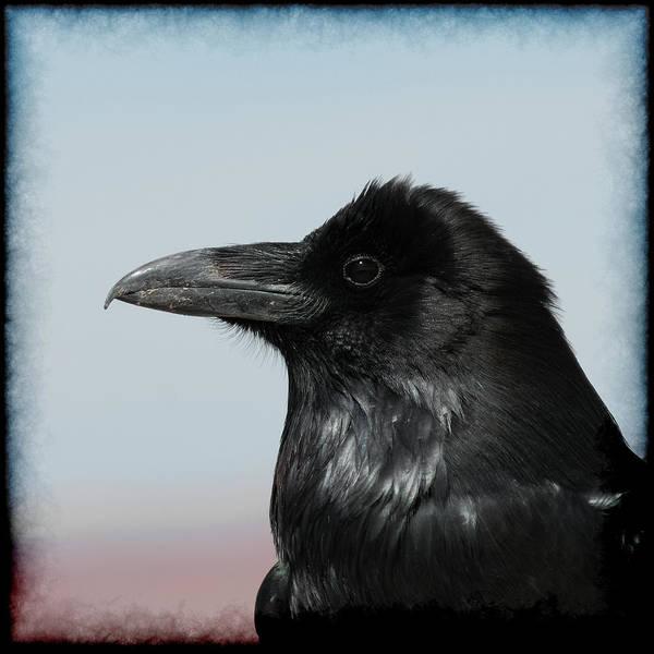 Raven Profile Art Print