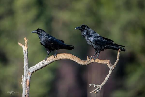 Photograph - Raven Raven by Torbjorn Swenelius