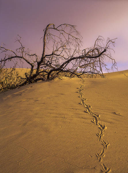Photograph - Raven Tracks by Robert Potts