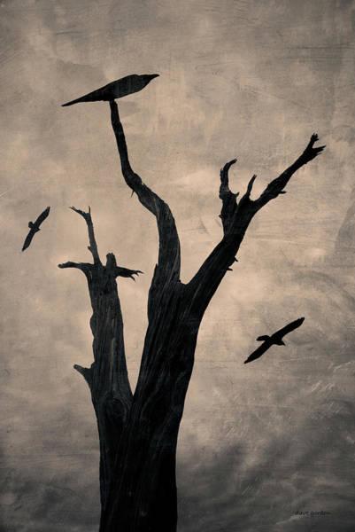 Photograph - Raven Tree by David Gordon