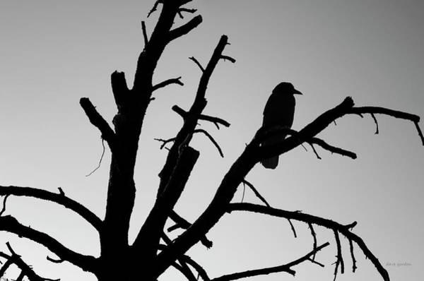 Photograph - Raven Tree II Bw by David Gordon