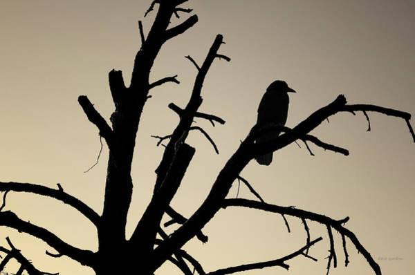 Photograph - Raven Tree II Bw Toned by David Gordon
