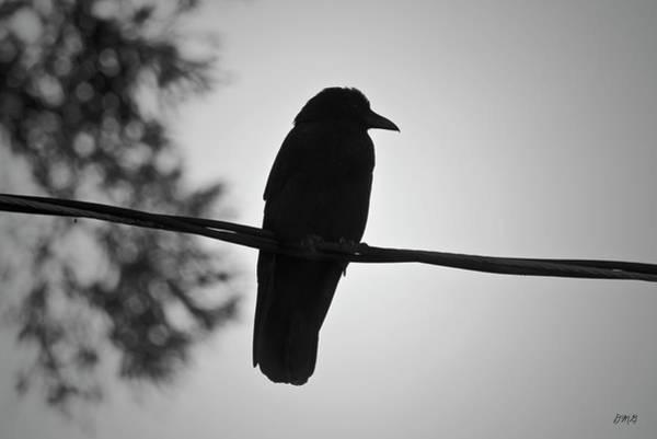 Photograph - Raven V Bw by David Gordon