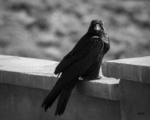 Photograph - Raven Vii Bw by David Gordon