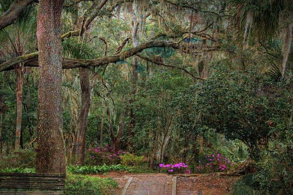 Photograph - Ravine Gardens State Park by John M Bailey