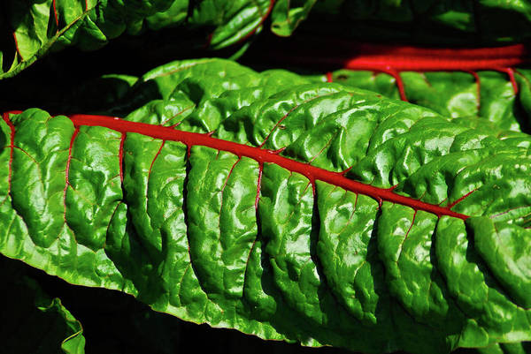Photograph - Raw Food by Harry Spitz
