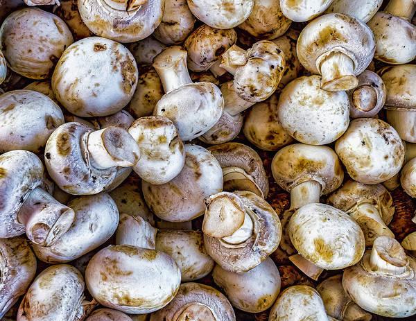 Photograph - Raw Mushrooms by Nick Zelinsky