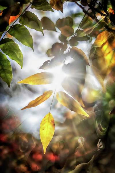 Manipulation Photograph - Ray Of Hope by Az Jackson