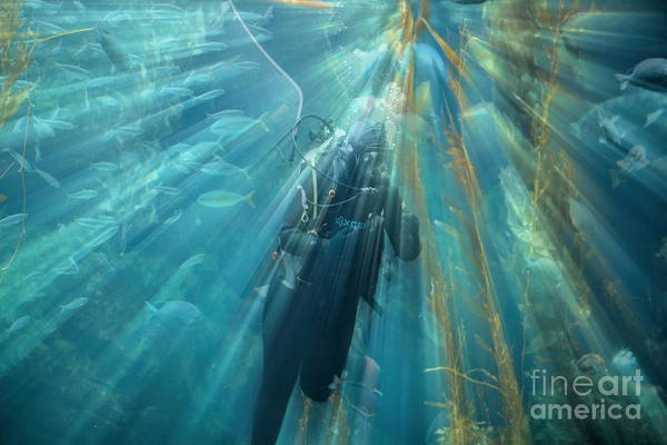 Fish Tank Photograph - Ray Of Light Diver Underwater  by Chuck Kuhn