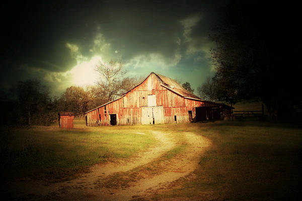 Photograph - Ray Of Light by Julie Hamilton