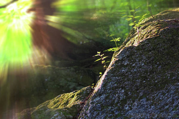 Moss Green Photograph - Rays by Jerry LoFaro