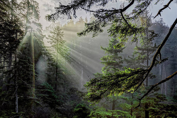 Photograph - Morning Rays Through An Oregon Rain Forest by Kay Brewer