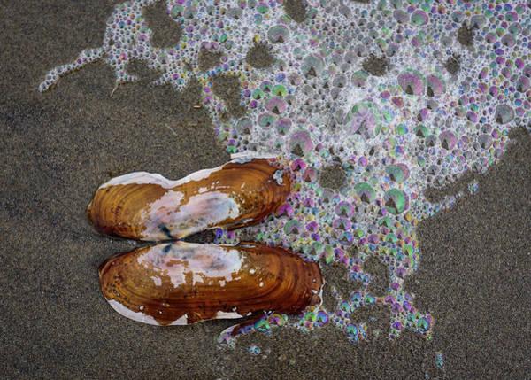 Photograph - Razor Clam Shells On Sand by Robert Potts