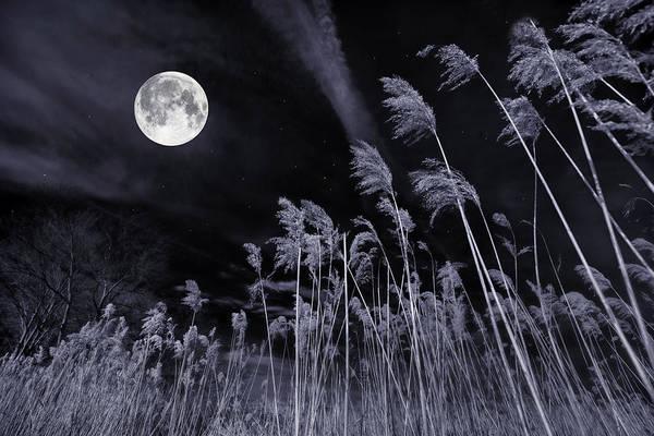 Photograph - Reach For The Moon by Robin-Lee Vieira