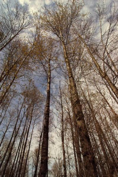 Reach For The Sky Wall Art - Photograph - Reach For The Sky by Bill Kellett