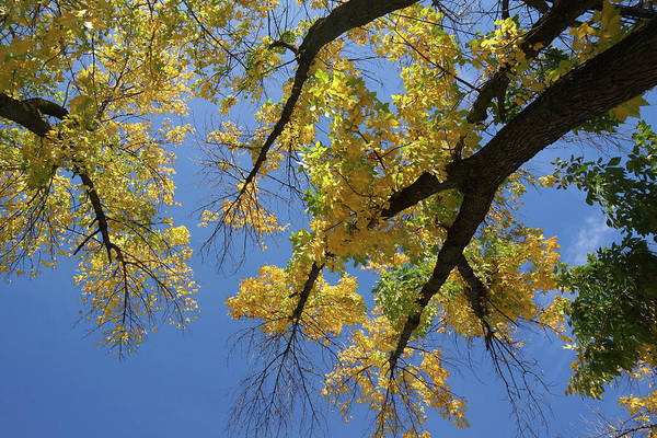 Photograph - Reach For The Sky by Cate Franklyn