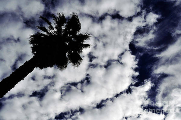 Photograph - Reach For The Sky by Clayton Bruster